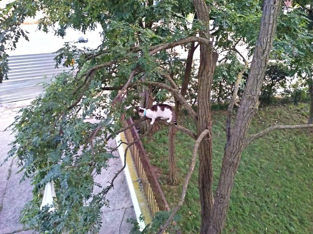 kot na drzewie