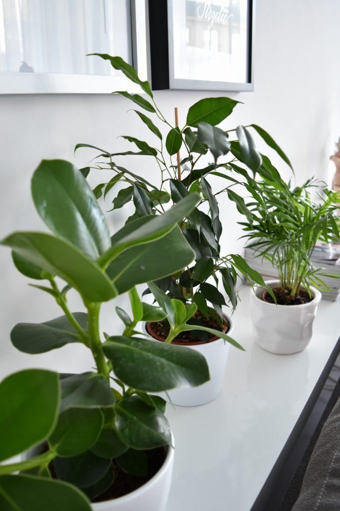 rośliny zielone